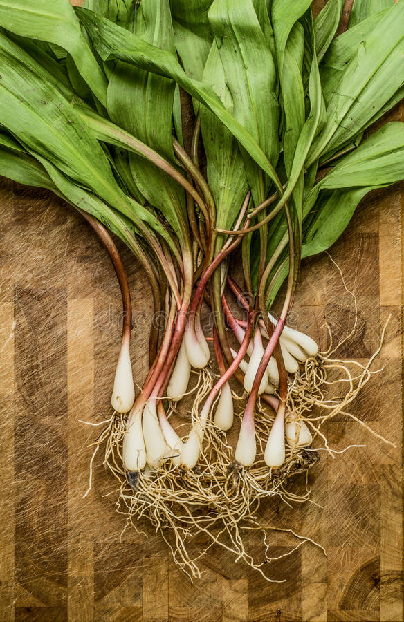 Fresh wild ramps (leeks). Freshly harvested wild ramps on a cutting board stock image