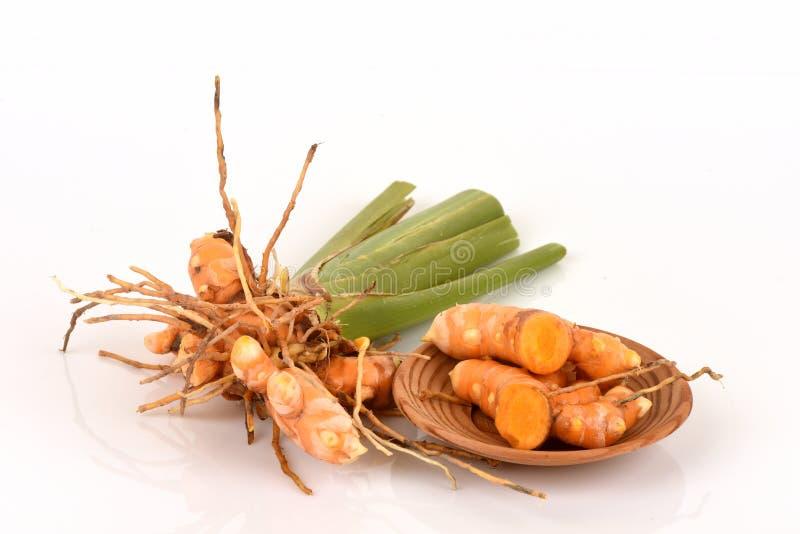 Fresh Wild Turmeric Curcuma aromatica Salisb. herb of thailand. royalty free stock photos