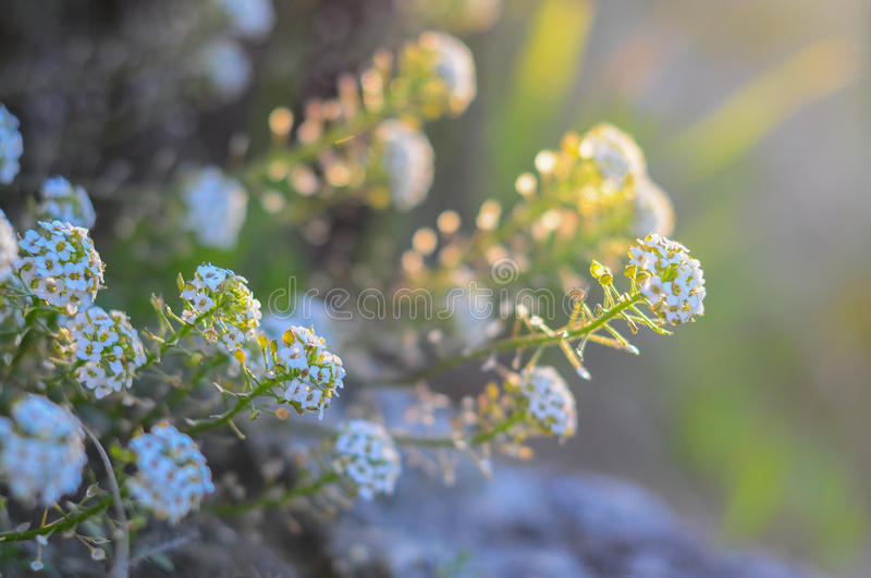 Fresh wildflowers spring or summer design. royalty free stock photo