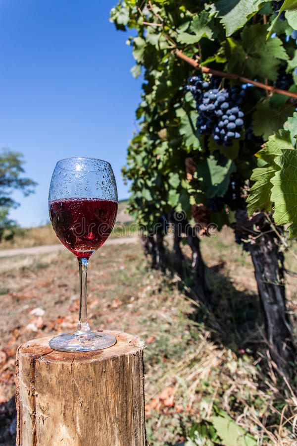 Fresh wine royalty free stock photography
