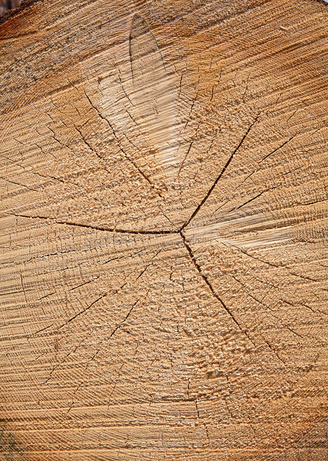 Download Fresh Wooden Studs Stock Photos - Image: 37664173