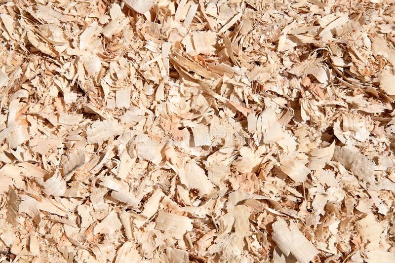 Download Fresh wooden studs stock photo. Image of natural, pattern - 37664188
