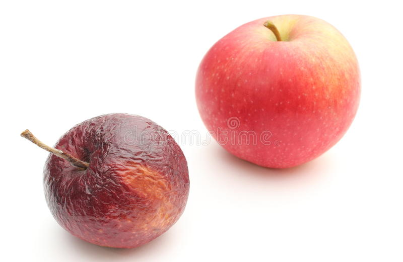 Fresh and wrinkled apples on white background royalty free stock image