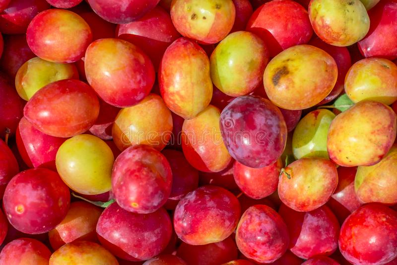 Fresh yellow cherries background royalty free stock image