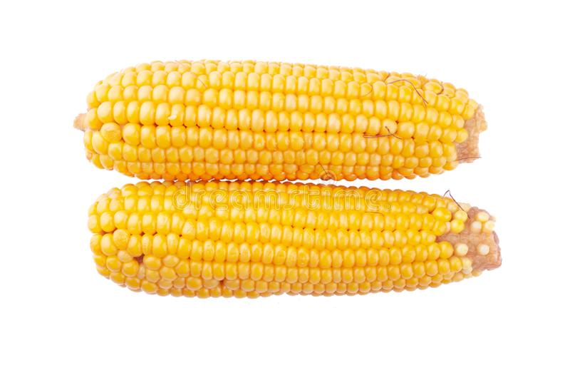 Fresh yellow ears of corn, cereal vegetables, queen of the fields  isolate on white background royalty free stock image