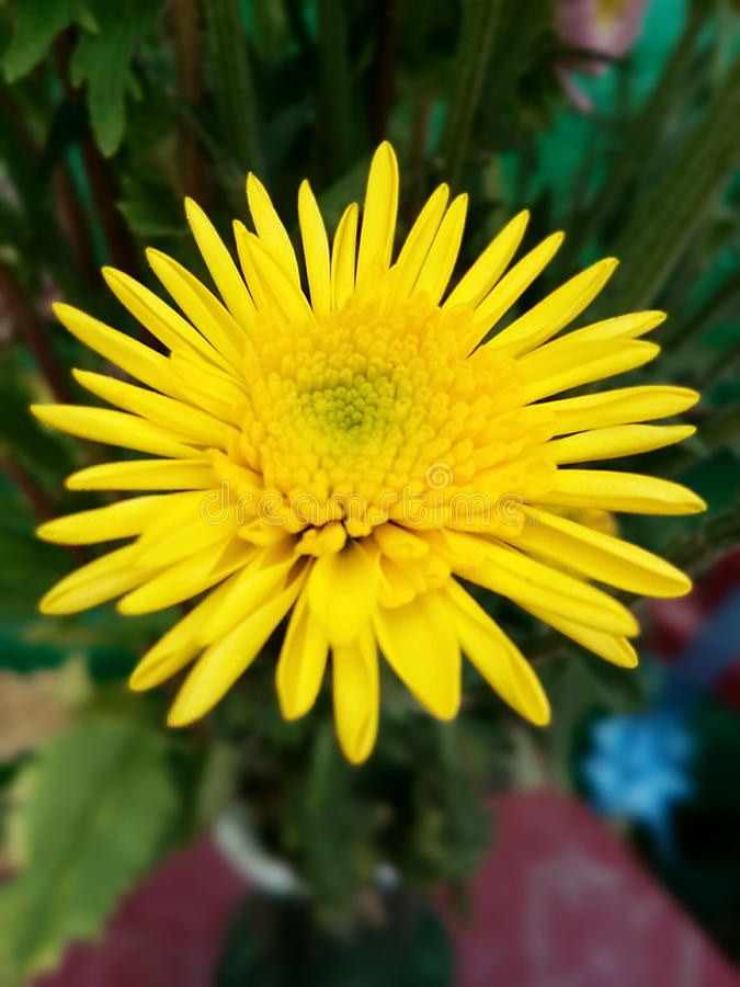Fresh yellow flowers stock images