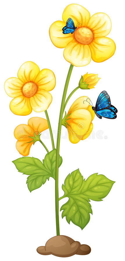 Fresh yellow flowers with butterflies vector illustration
