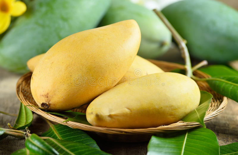 Fresh yellow and green mango on wooden background royalty free stock photos