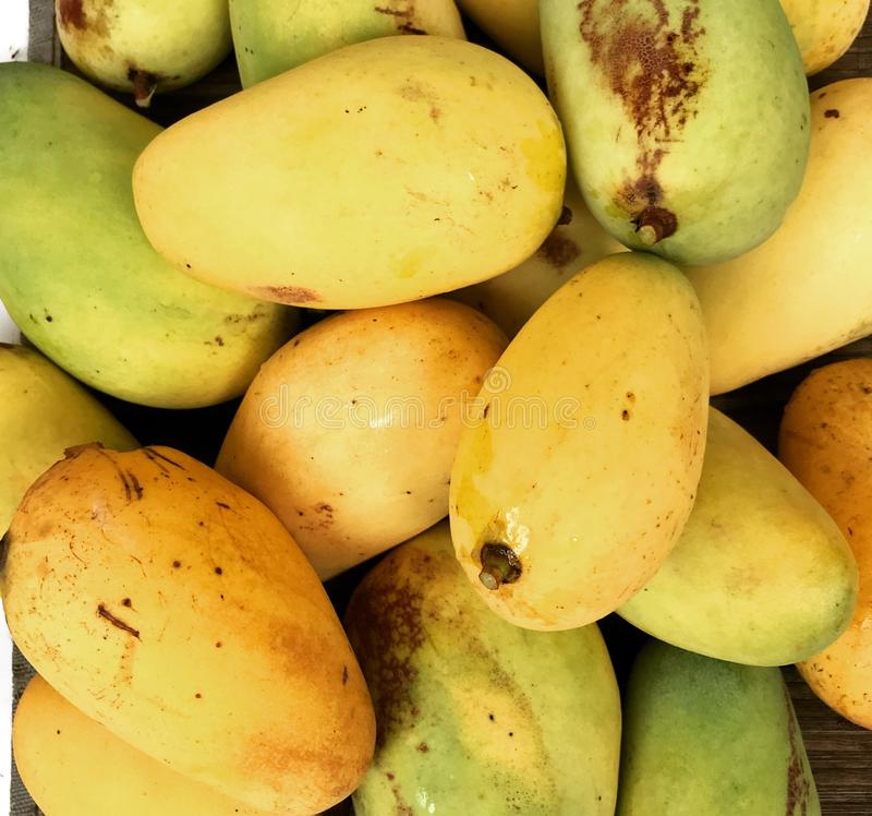 Mango. A lot of fresh yellow and green mangoes stock photos