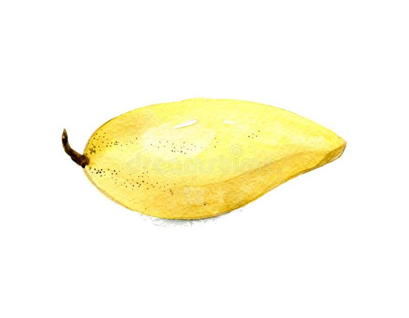 Fresh yellow mango. Watercolor illustration isolated on white background royalty free illustration