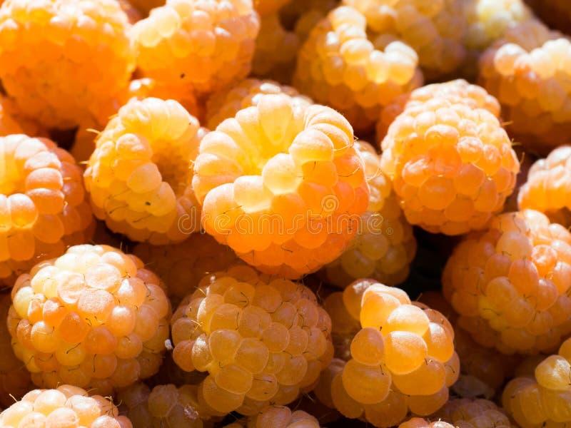 Fresh yellow raspberries close up stock photos