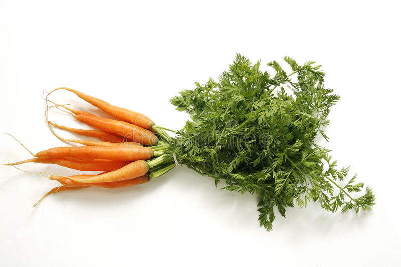 Fresh young bunch of carrots stock photos