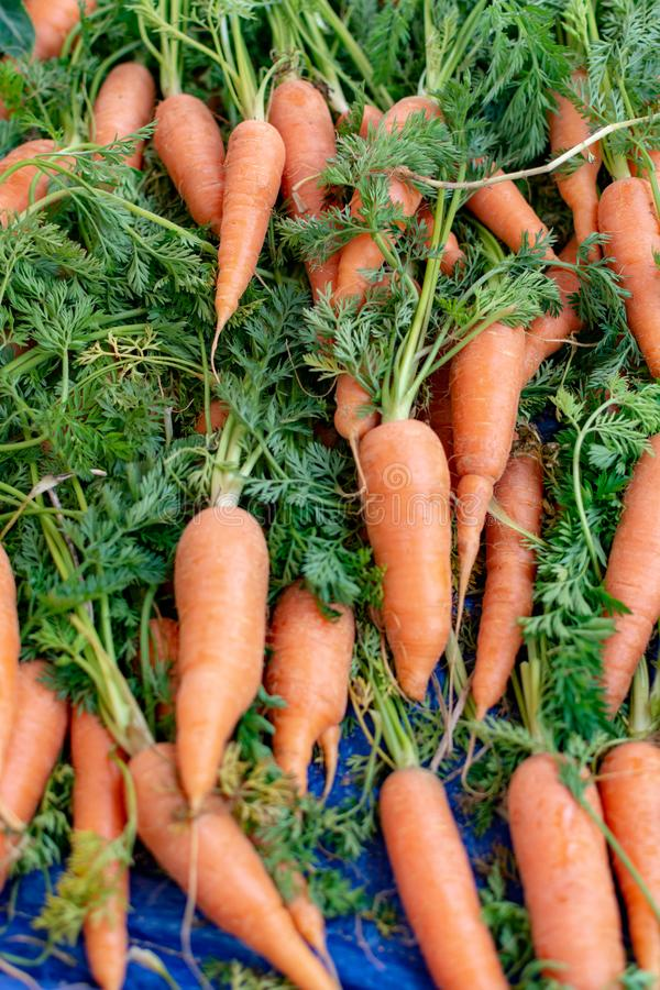 Fresh young carrots with leaves on farmers market stock images