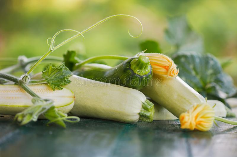 Pile of Freshly harvested courgette with leaves and flowers royalty free stock image