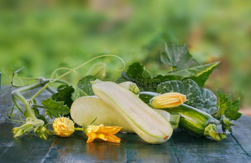 Fresh zucchini, green vegetables from local farm. royalty free stock images