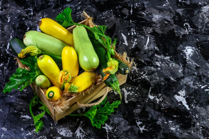 Fresh zucchini, green vegetables on local farmer market, freshly harvested courgette, summer squash. place for text royalty free stock image