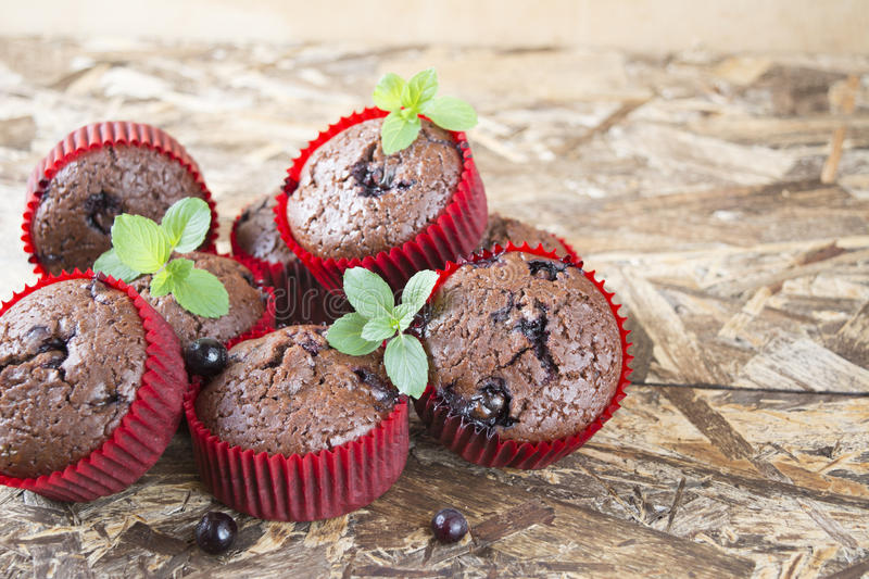 Freshly baked chocolate muffins with currant and mint in red forms royalty free stock images