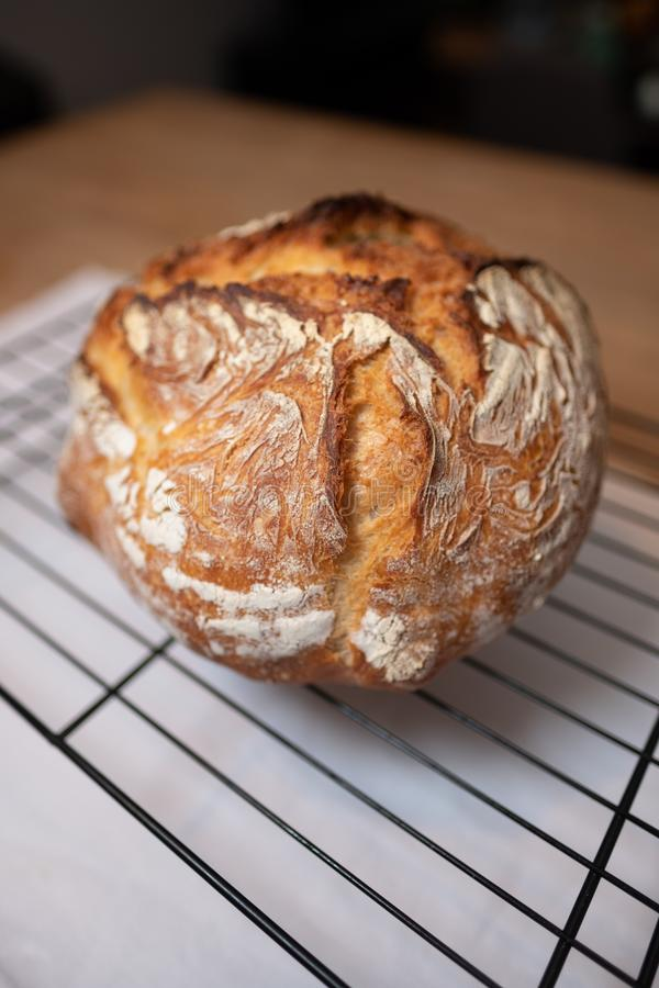 Freshly baked loaf of bread, isolated and drying royalty free stock photography