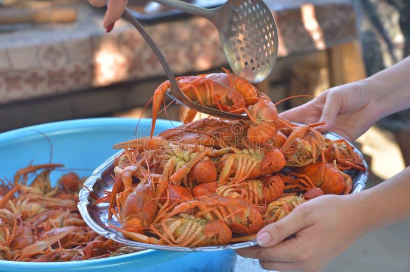 Freshly boiled crayfishes stock photography