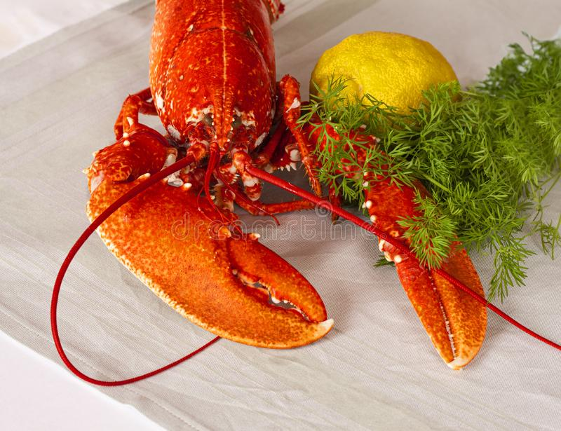 Freshly boiled red lobster lying on a table with lemon and dill. royalty free stock image