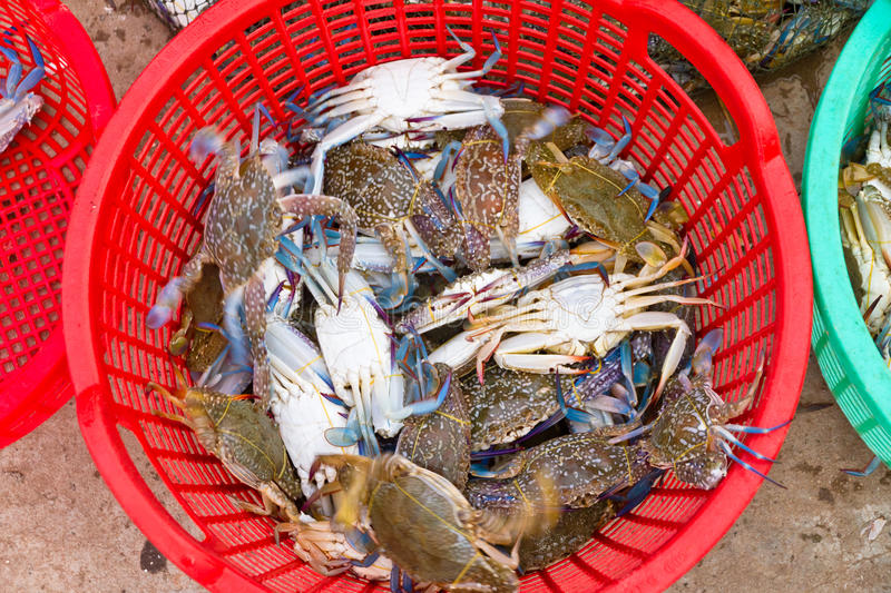 Download Freshly Caught Blue Crabs, Vietnam Royalty Free Stock Photos - Image: 18677438