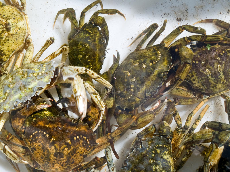 Download Freshly Caught Crabs Royalty Free Stock Image - Image: 11976216