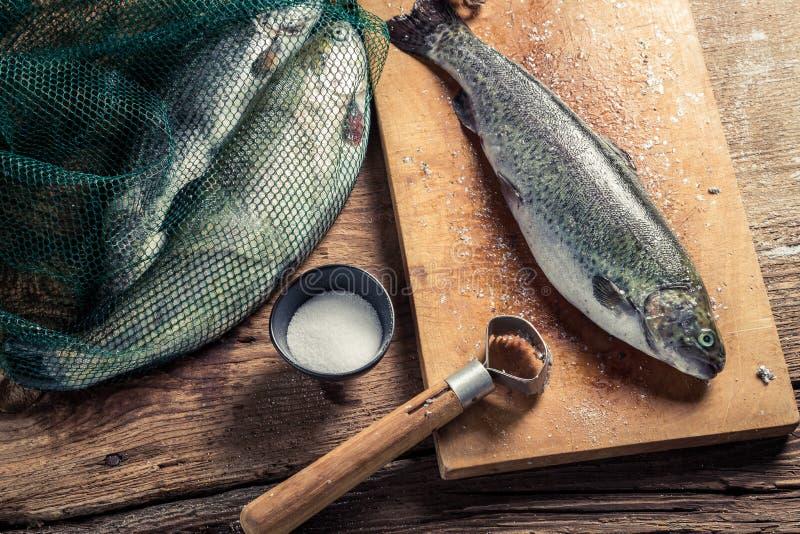 Freshly caught fish for dinner royalty free stock image
