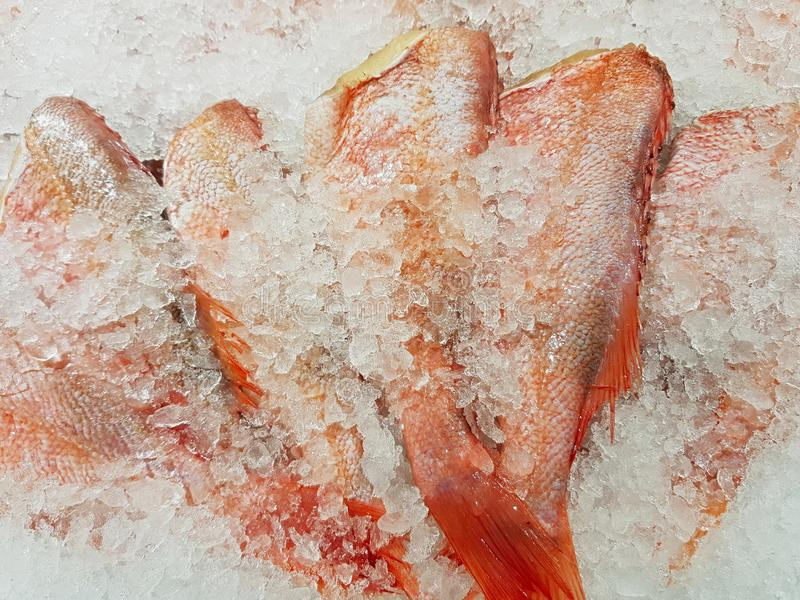 Freshly caught fish with ice on store shelve. A lot of fresh raw fish on store shelve with ice stock photography