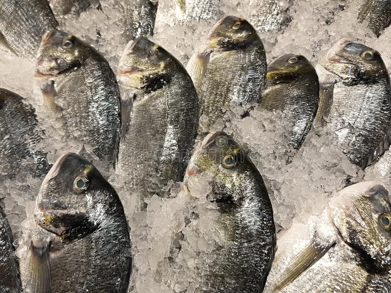 Freshly caught fish with ice on store shelve. A lot of fresh raw fish on store shelve with ice royalty free stock image