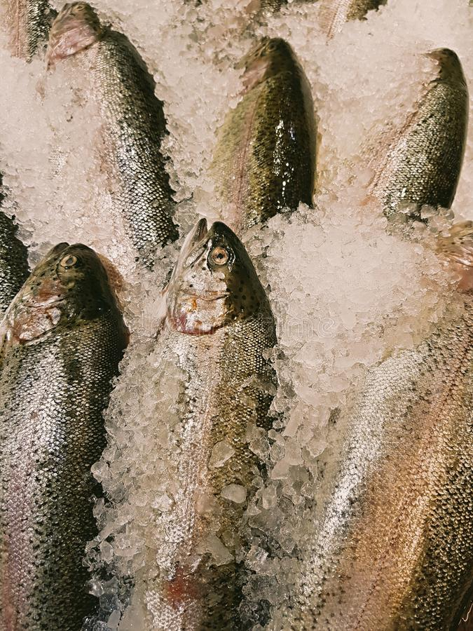 Freshly caught fish with ice on store shelve. A lot of fresh raw fish on store shelve with ice stock image
