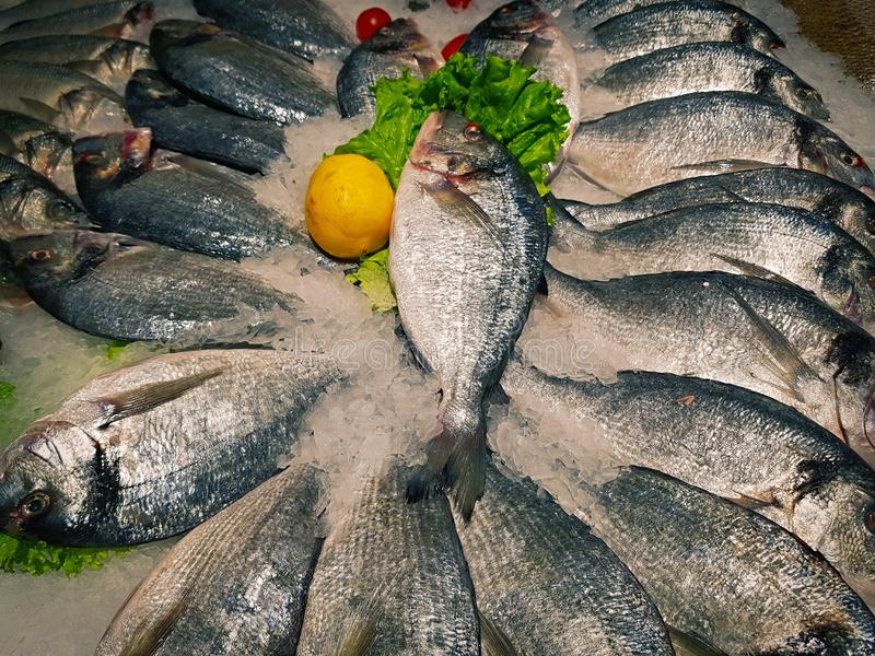 Freshly caught fish with ice on store shelve. A lot of fresh raw fish on store shelve with ice royalty free stock photography