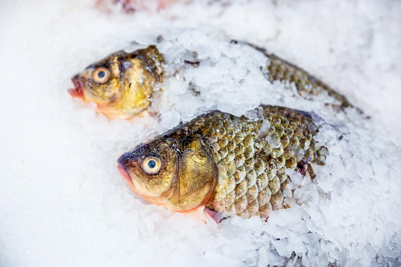 Fresh fish at the store counter. Freshly caught fish lies on the ice for storage in the store royalty free stock images
