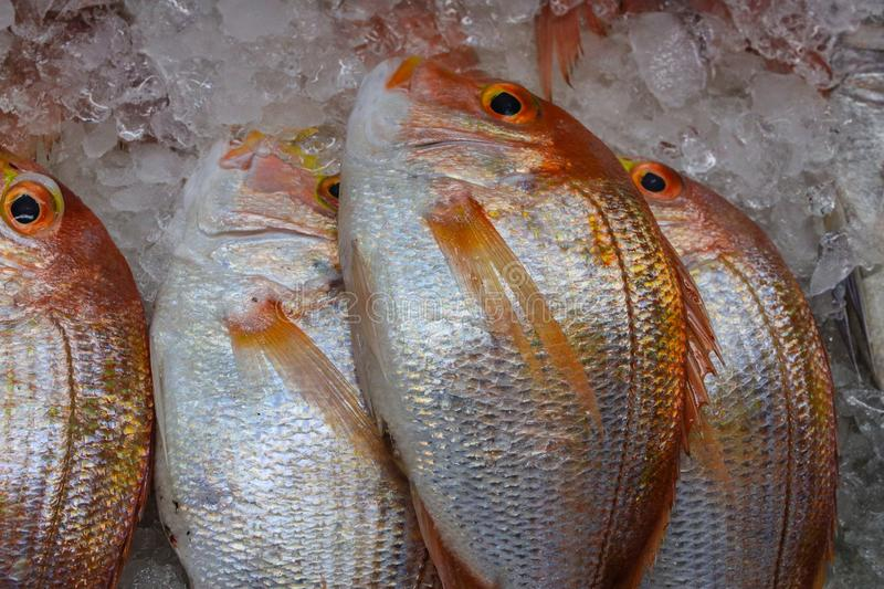 Fish on Ice. Freshly caught rock fish on ice at a fish market in Busan, South Korea stock photos