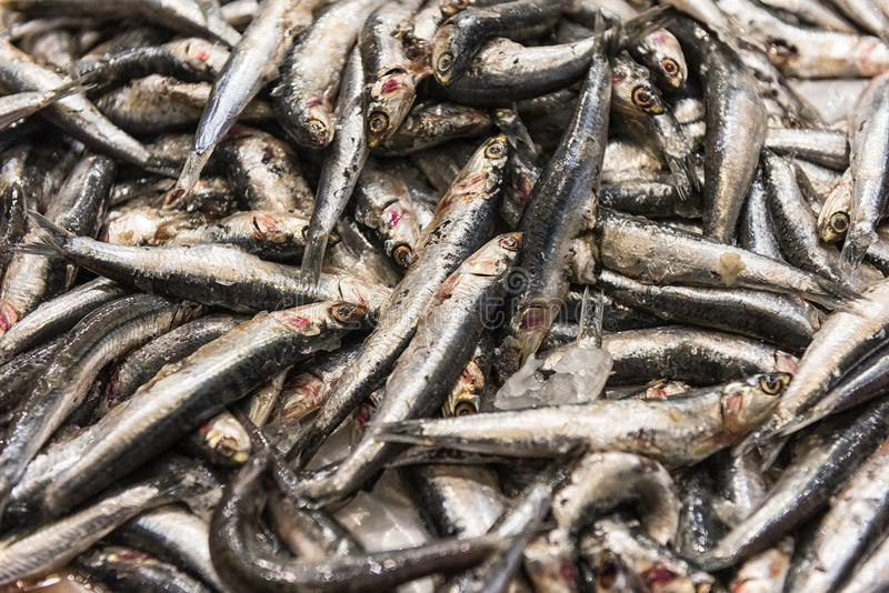 Freshly caught sardine fish at markets. `Sardine` and `pilchard` are common names used to refer to various small, oily fish in the herring family Clupeidae stock photography