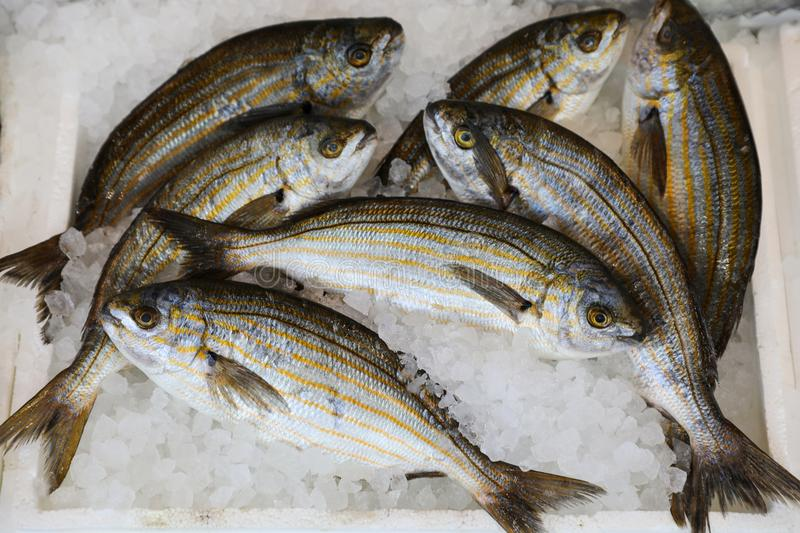 Freshly caught Sarpa salpa also called dreamfish, salema, salema porgy, cow bream or goldline, from a species of sea bream in the. Box on the counter at the stock photo