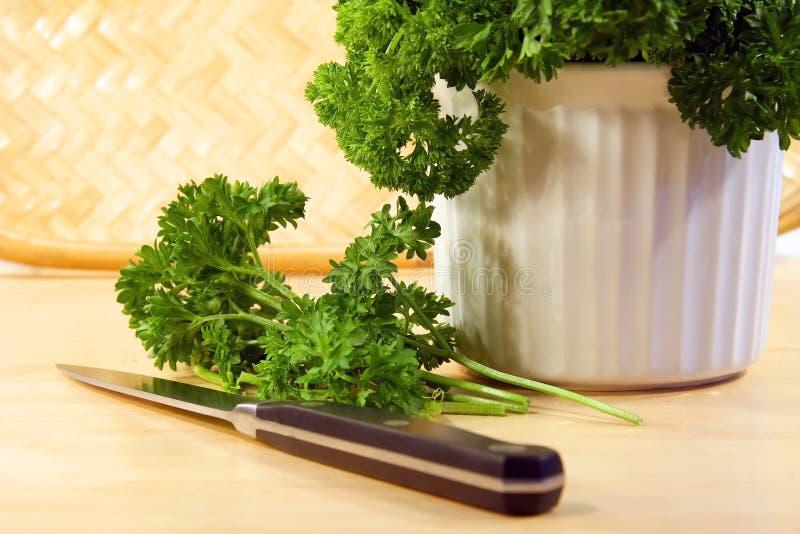Freshly chopped parsley. Cutting freshly chopped parsley stock images