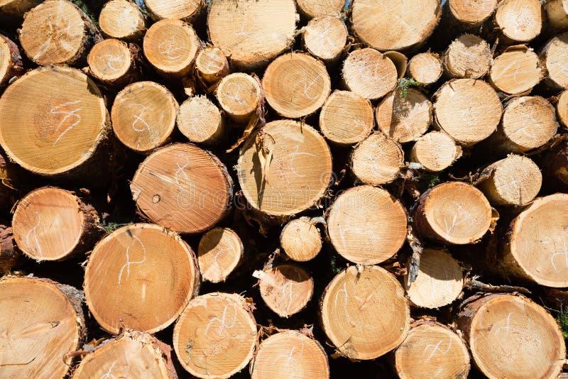 Freshly chopped tree logs stock image
