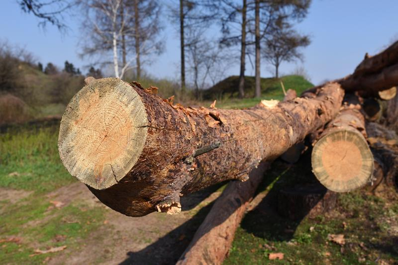 Freshly chopped tree logs stacked up on top of each other in a pile. Wood preparation stock images