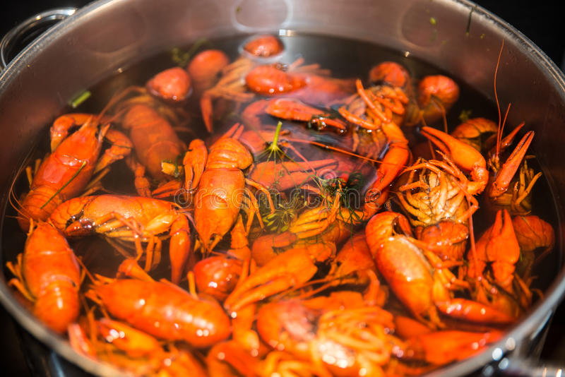 Freshly cooked crayfish with dill and salt royalty free stock images