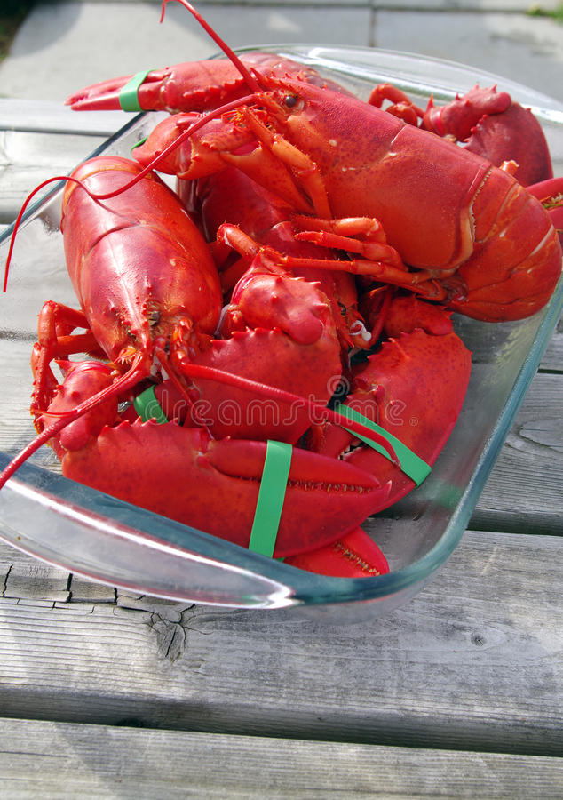 Free Freshly Cooked Lobster Royalty Free Stock Photos - 26094558