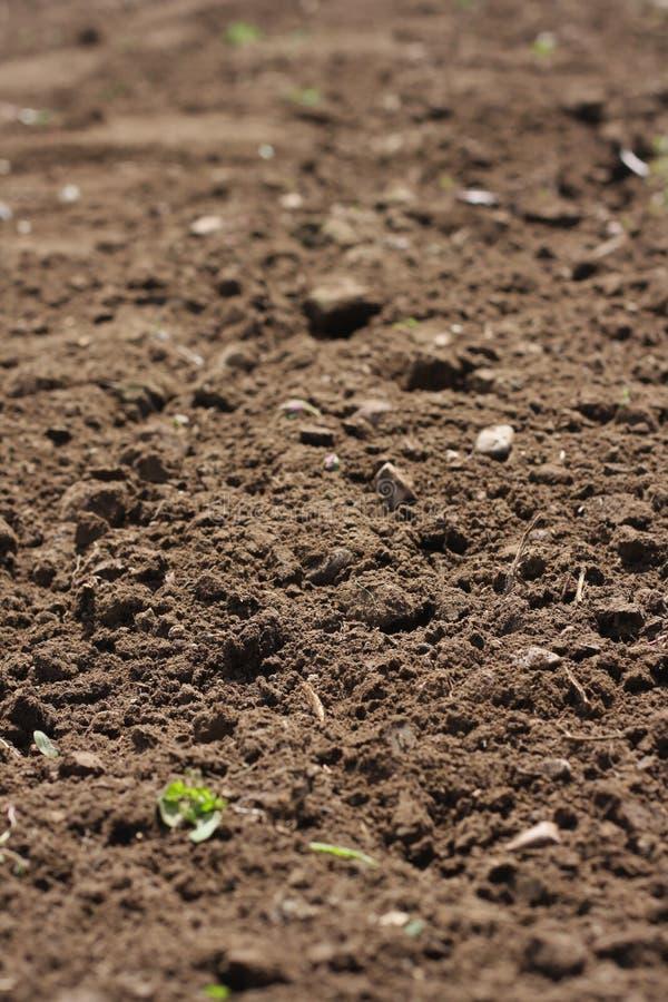 Freshly cultivated garden soil stock image
