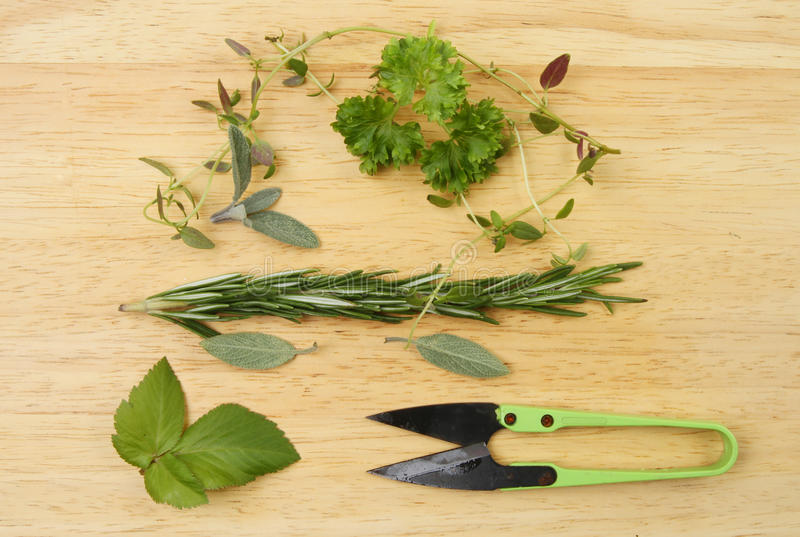 Freshly cut herbs. Freshly cut herb leaves with a pair of miniature shears on a wooden board royalty free stock photo