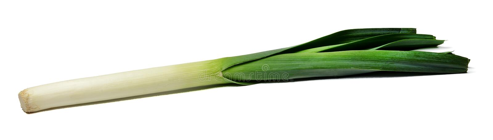 Freshly cut leek in a long rectangular frame. White isolated background. Close-up. royalty free stock photo