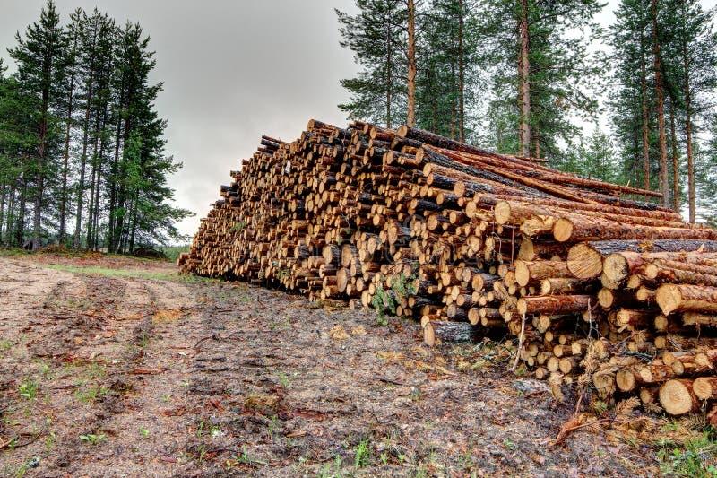 Download Freshly cut tree logs stock photo. Image of fuel, logging - 33311378