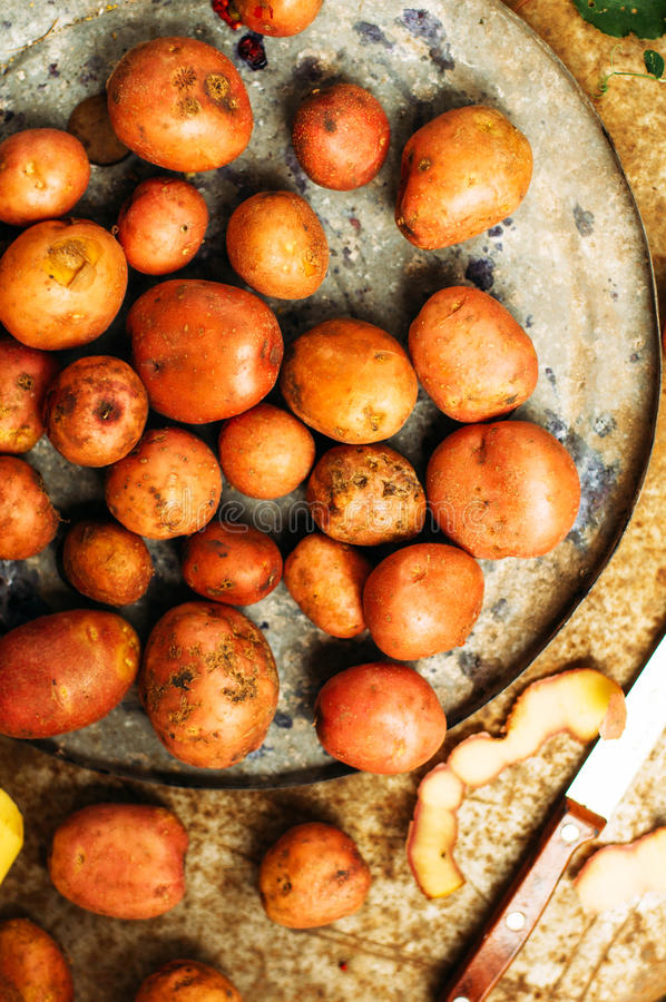 Freshly dug potatoes from a garden. metal table with potatoes. Close up shot of a basket with harvested potatos stock images