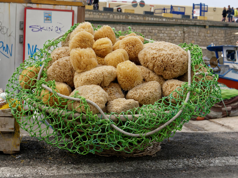 Freshly Fished Sponges stock photos
