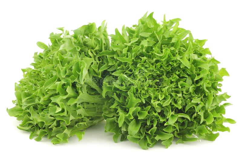 Freshly harvested curly lettuce royalty free stock images