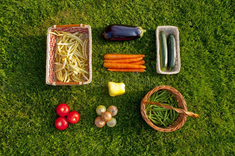 Freshly harvested home grown vegetables lying on grass - top vie. Freshly harvested home grown vegetables lying orderly on grass - beans, tomatoes, pepper royalty free stock images