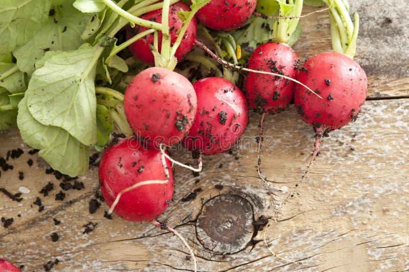 Freshly harvested radish against wooden background stock photo