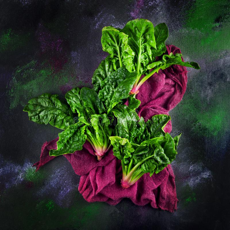Freshly harvested spinach on dark kitchen plate and napkin royalty free stock image